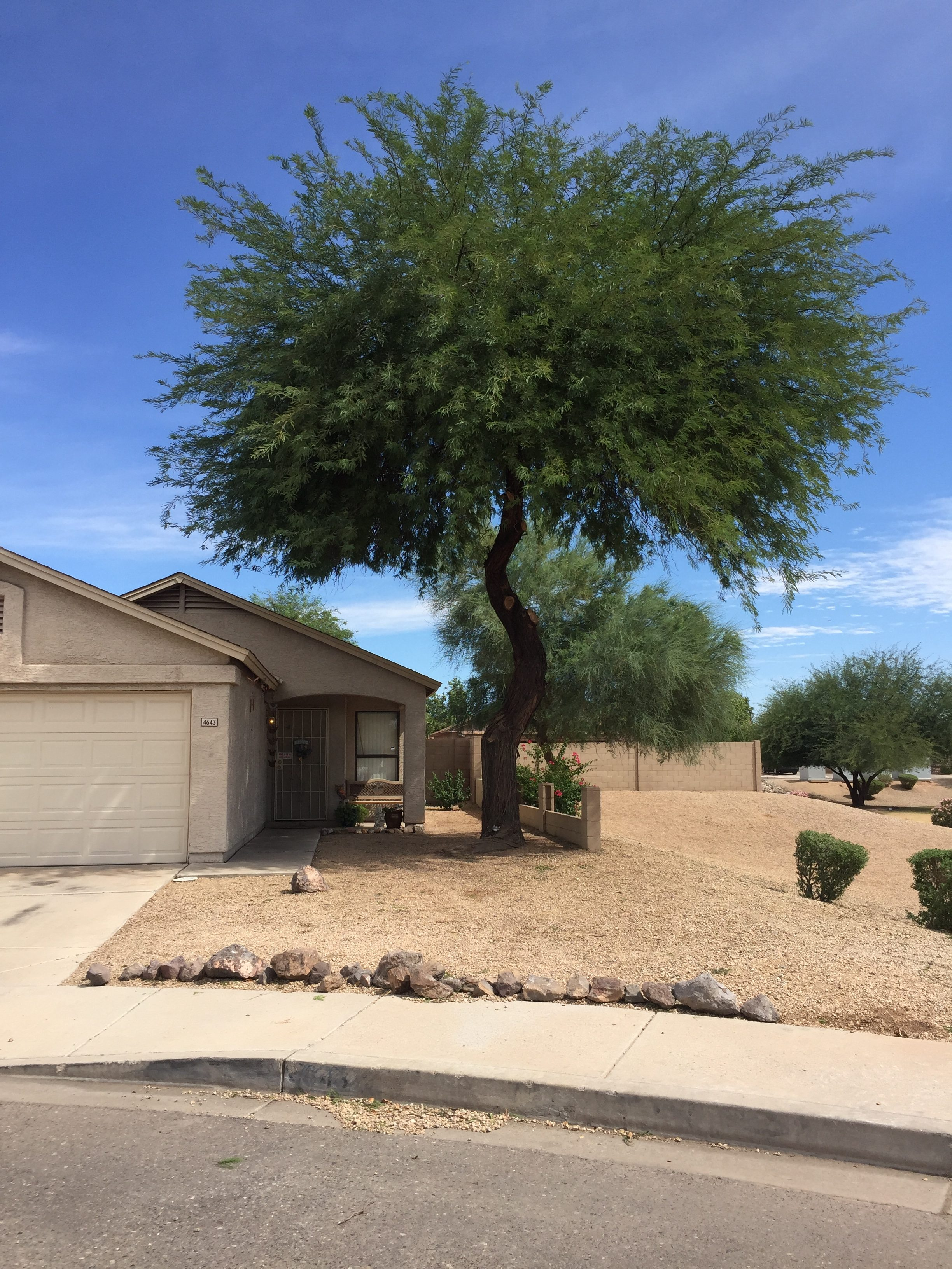 Tree Trimming in Phoenix Arizona - After
