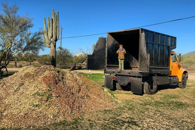 Arizona Tree Maintenance